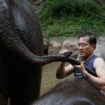 ช้าง : ยักษ์ตกยากในปีโควิด โดย วีระศักดิ์ โควสุรัตน์ สมาชิกวุฒิสภา กรรมาธิการทรัพยากรธรรมชาติและสิ่งแวดล้อม ของวุฒิสภา
