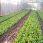 """เที่ยวสวนผัก """"บ้านเทอดชาติ"""" แหล่งปลูกผักอินทรีย์ที่ใหญ่ที่สุดของภาคเหนือ"""