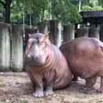 องค์การสวนสัตว์ ชวนปันสุข เพื่อเพื่อนๆสัตว์ป่า เปิดตัวโครงการอุปถัมภ์สัตว์ป่า มุ่งหวังให้ทุกคนมีส่วนร่วมในการอนุรักษ์ทรัพยากรสัตว์ป่า พร้อมกันทุกสวนสัตว์ทั่วประเทศ